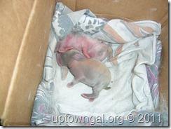 newborn Pinky & Fatty