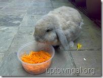 MC eating carrots