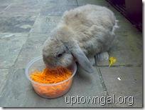 MC eating carrots2