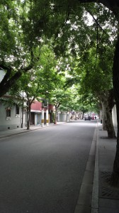The famous shady trees everyone talks about when they mention the French Concession area
